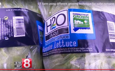 Safer Romaine Lettuce